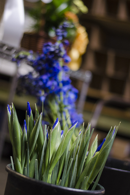 FlowersFruit4.jpg