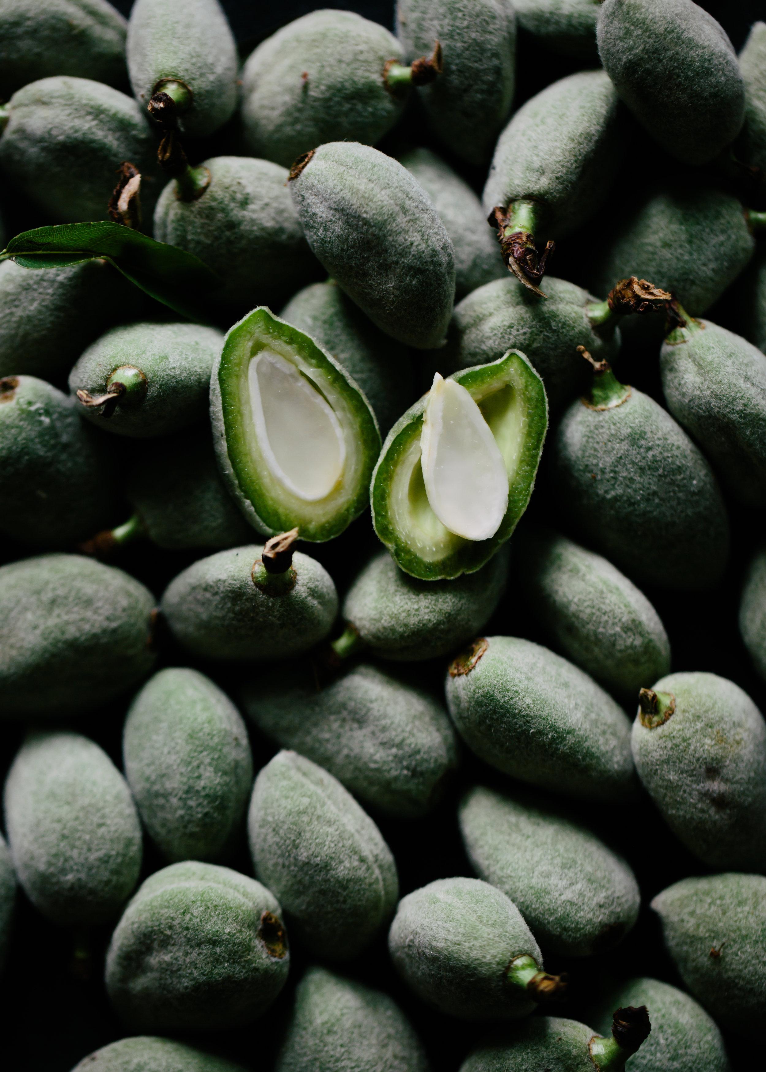 green almond-3927.jpg