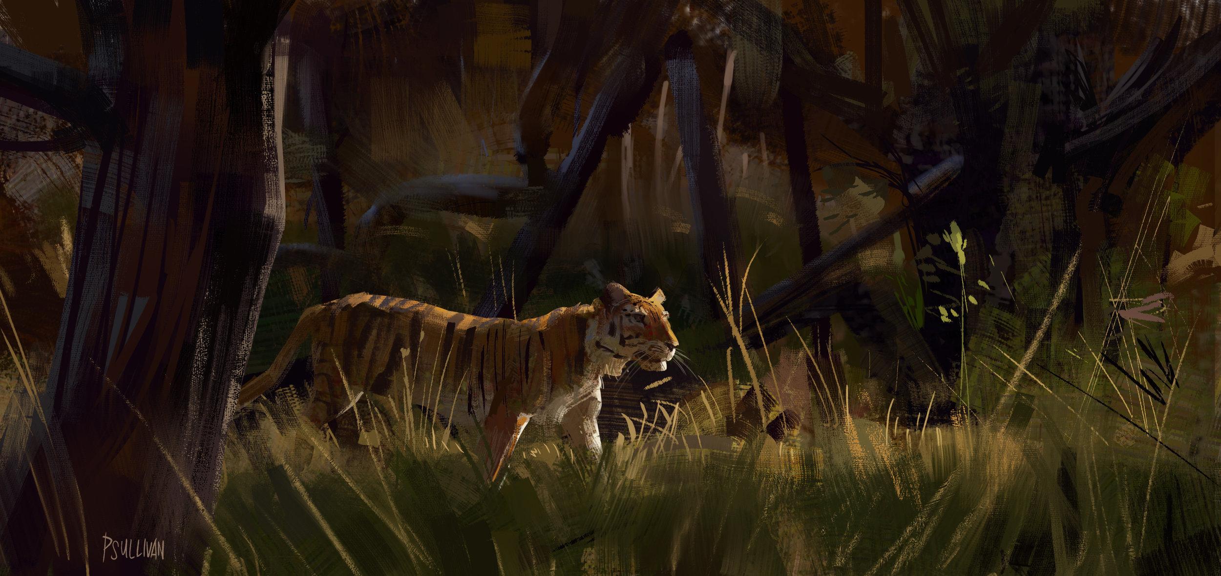 Tiger Study3_Paul Sullivan.jpg