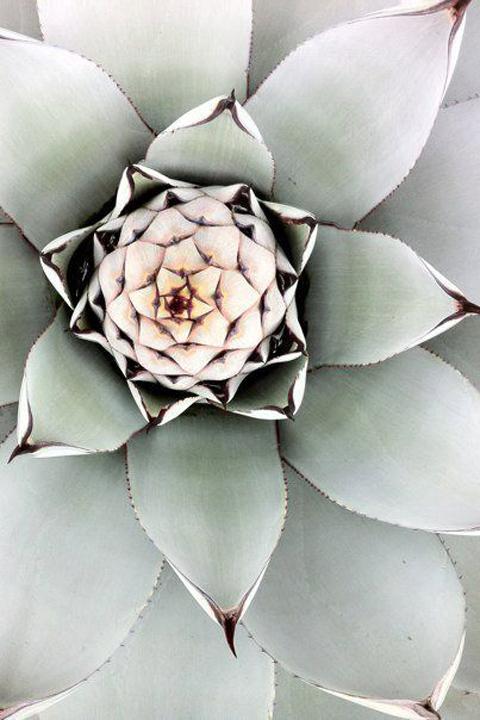 Desert dwelling succulent.