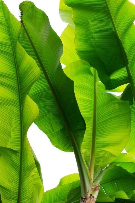 Vibrant green tropical leaves