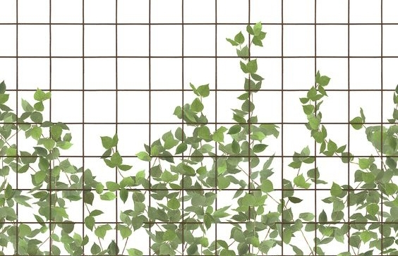 Climbing Clorofyl wallpaper - a look easily achieved with printed tile.