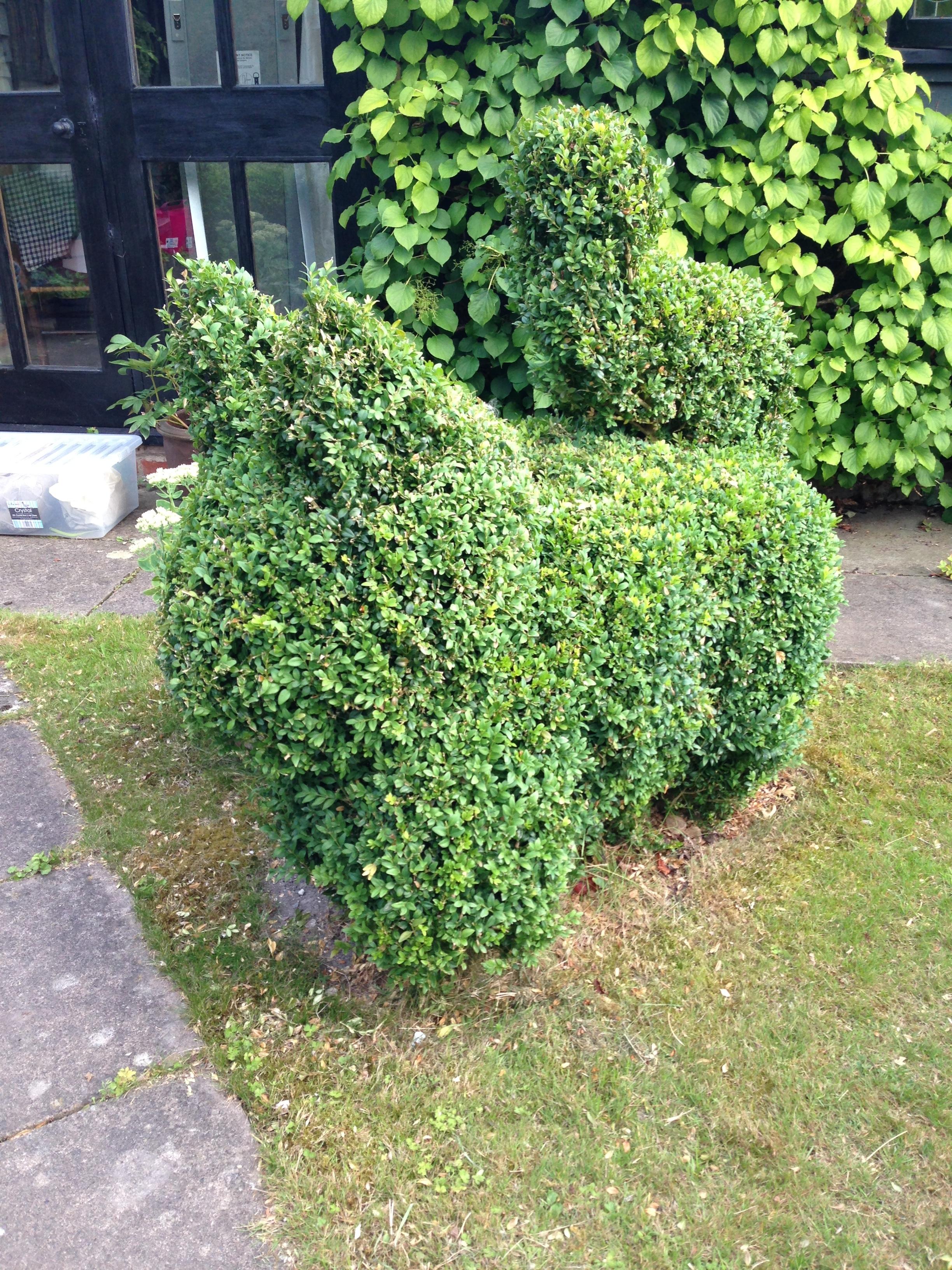 ^ Hedge art - a cat?