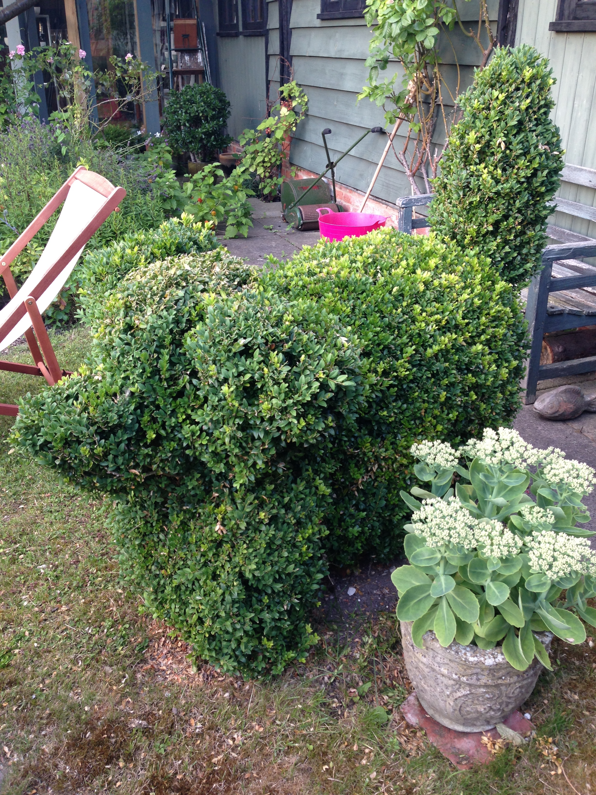 ^ Hedge art - a dog?