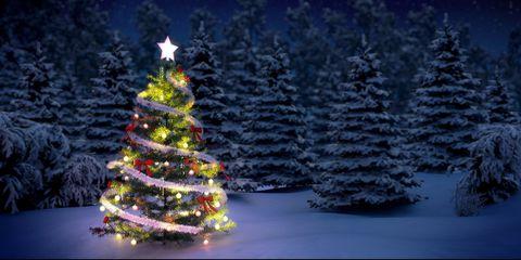 christmastreeinforest.JPG