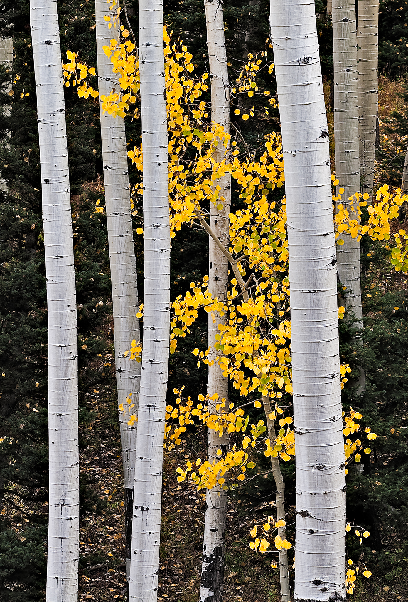 Scenes from Owl Creek Pass in the Uncompahgre National Forest