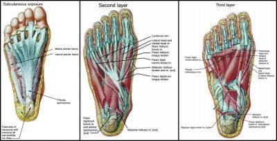 Foot-3-layers.jpg