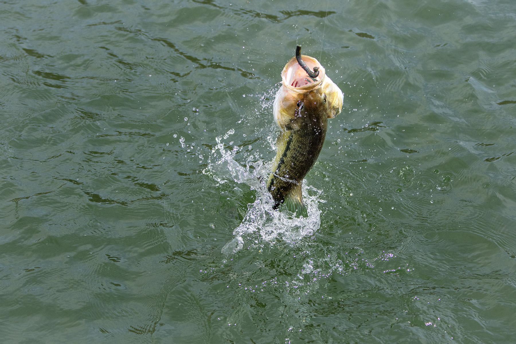Z-Man Fishing Gear