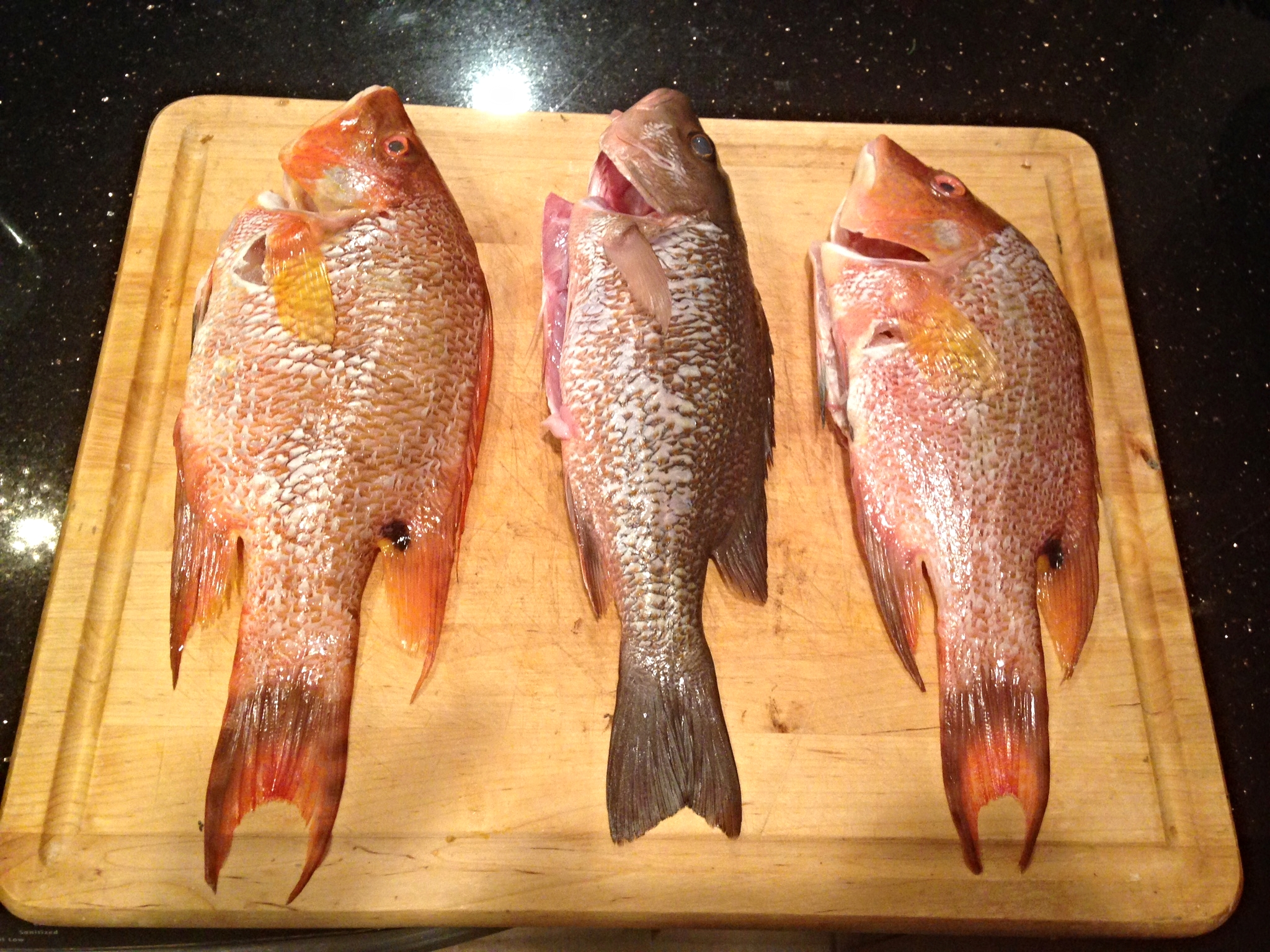 Average sized Mangrove Snapper or Hogfish perfect for preparing whole.