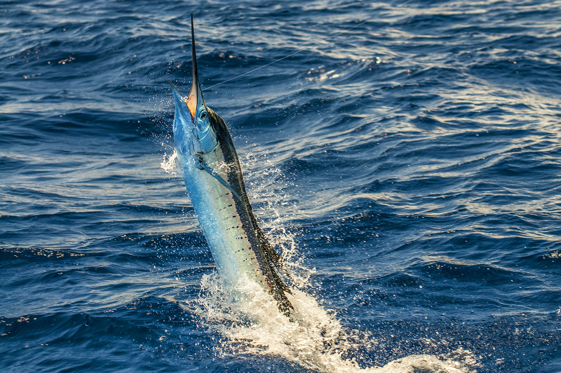 For episodes on Sailfish or Marlin, go to our Youtube Channel at  https://goo.gl/9M88Rv