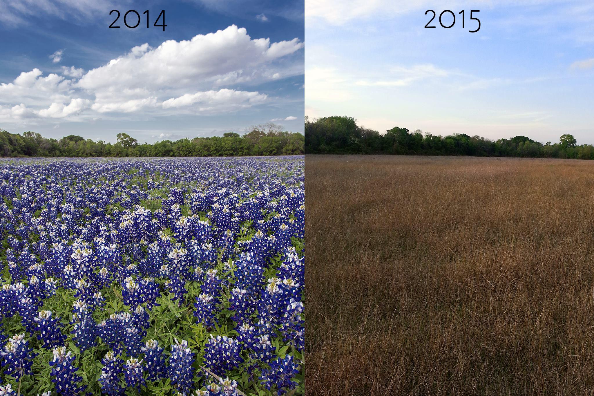 Same location in the same field in Round Rock, Texas. Shots were taken one year apart.