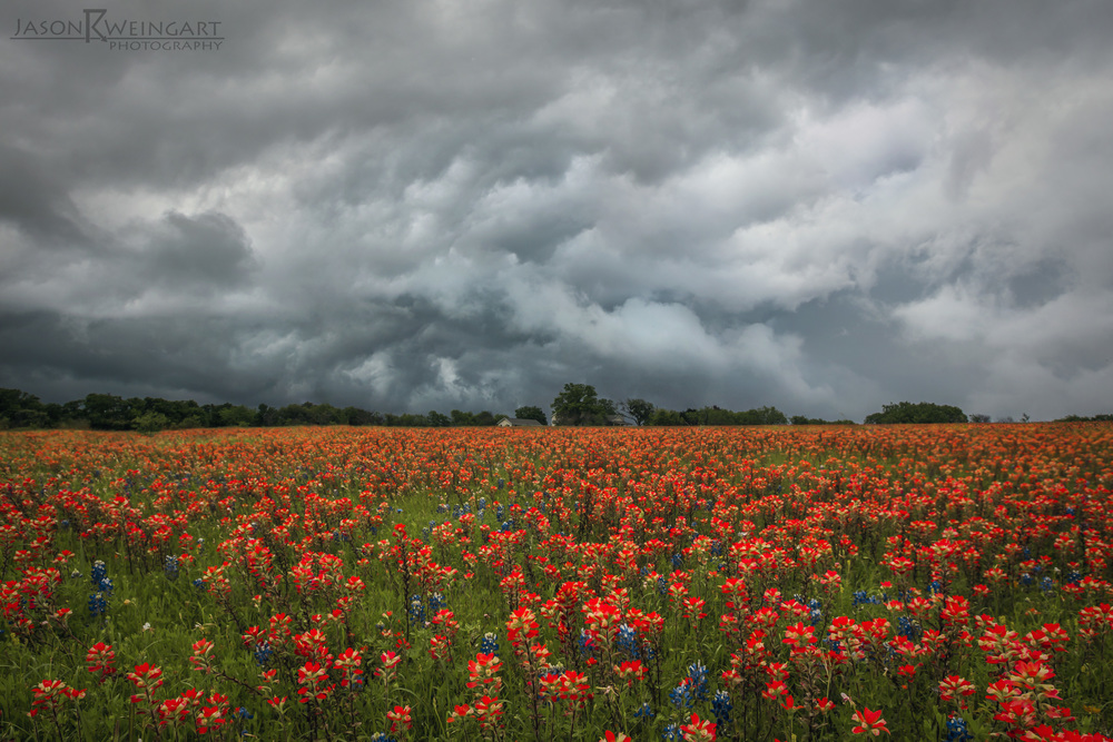 Thunderstorm over a field of indian paintbrush in Georgetown, Tx.