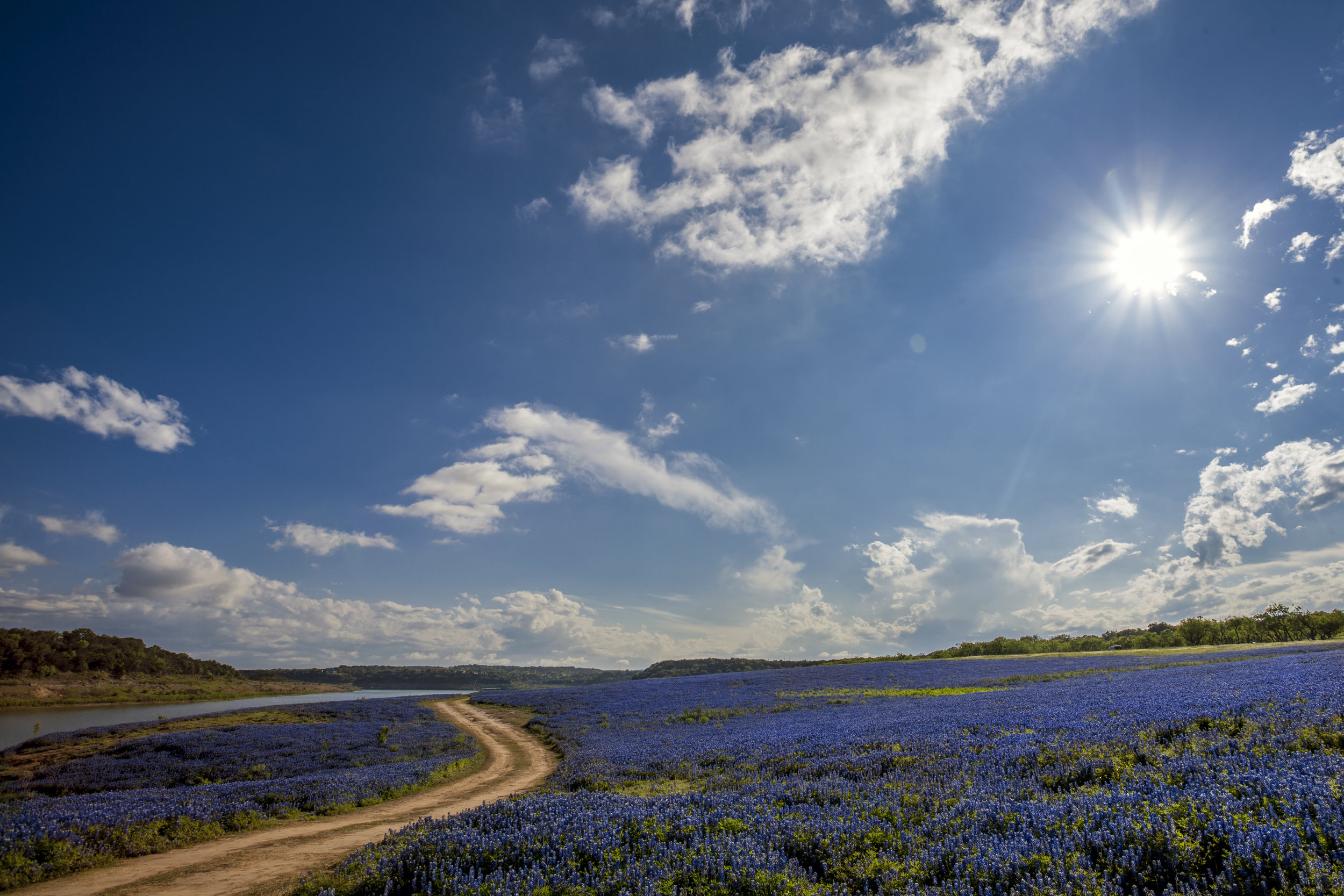 2017 texas bluebonnet season best fields locations places see where photography tour tours workshop workshops Hill Country Austin Things to do