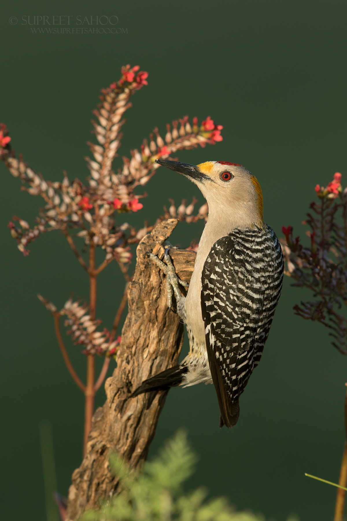 Capture tack-sharp images of rare birds.
