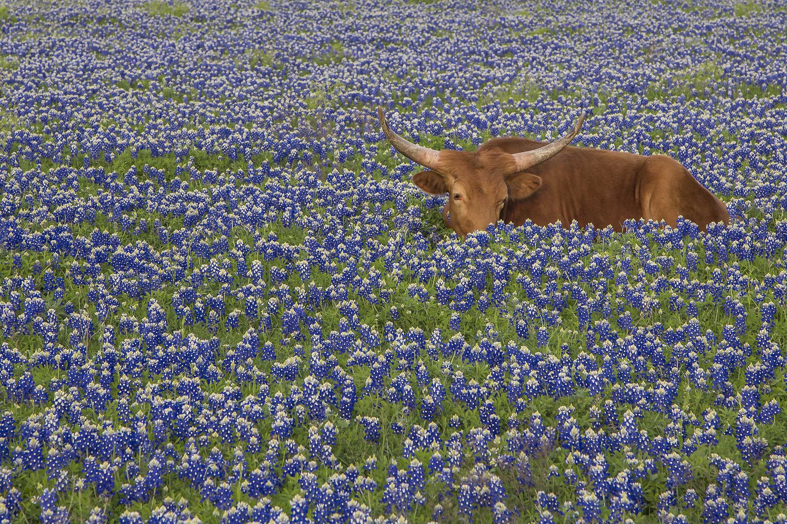 Where to Find the Best Bluebonnets in 2019 — Jason Weingart Photography