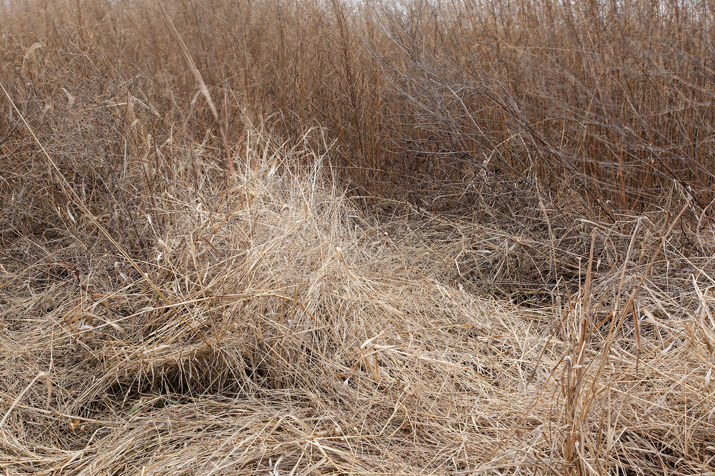 8.1500.Wasteland-Ecology.0004.jpg