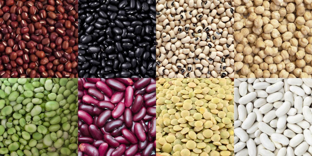 bean_banner.jpg