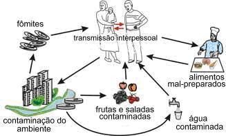 Hepatite_A_-_Curso_Sorológico_Típico.jpg