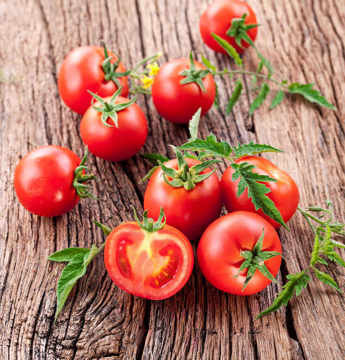 Organic-Tomatoes-for-Juice.jpg