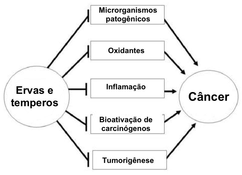 Traduzido por Andreia Torres de  Kaefer, & Milner, 2008