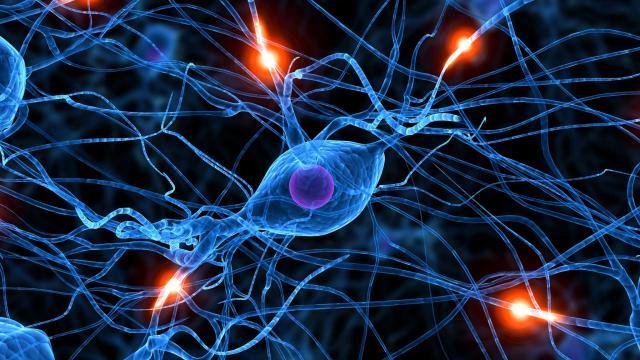 HGT0066_neurons-seizure-brain_FS.jpg