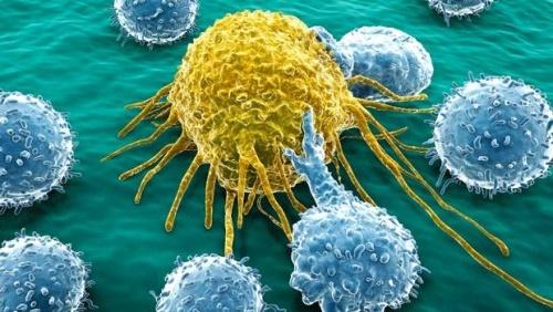 cancer-1-500x282.jpg