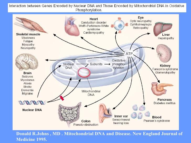 doencas-mitocondriais-23-728.jpg