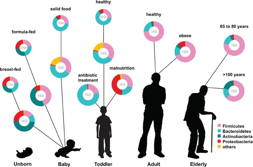 Ottman et al., 2012