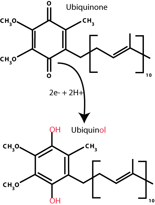 Ubiquinone_ubiquinol_conversion.png