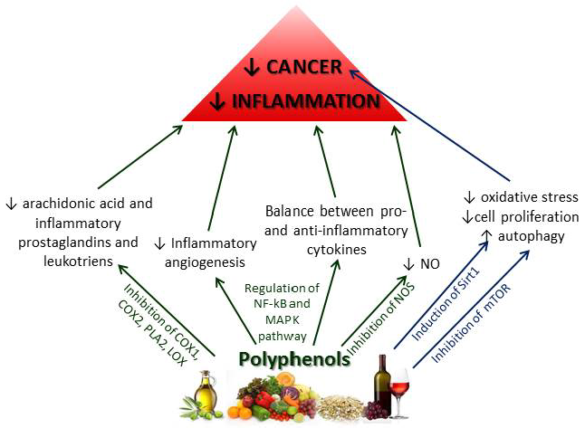 Polyphenols-control-and-reduce-inflammation-through-a-series-of-pathways-preventing.png