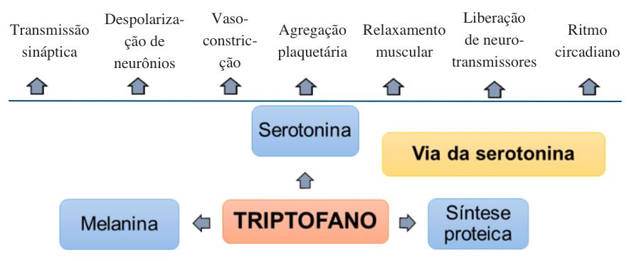 serotonina.png