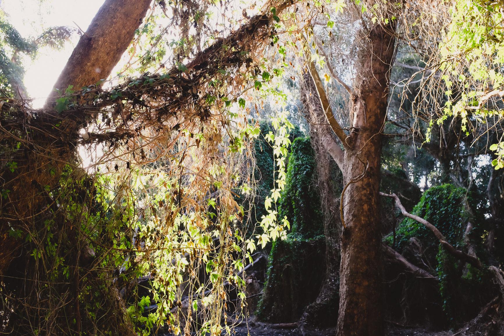 careniup wetlands perth secret garden