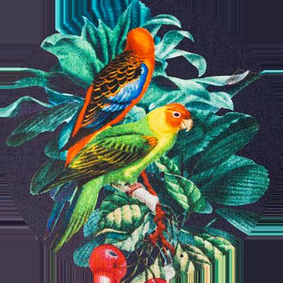 300 Navy Parrot