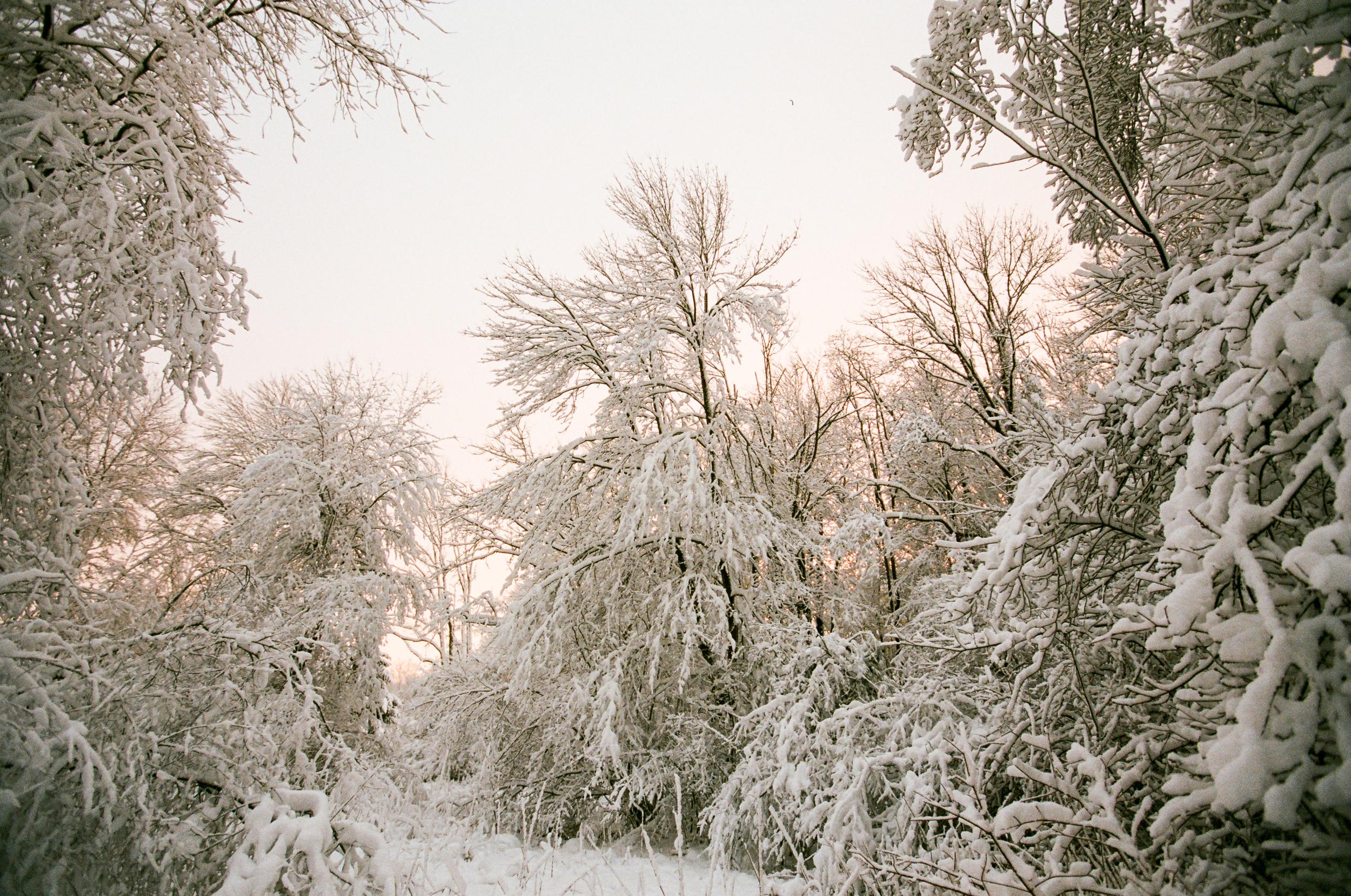 Pink Snow (Canon 1v :: Portra 400 @320)   36/366