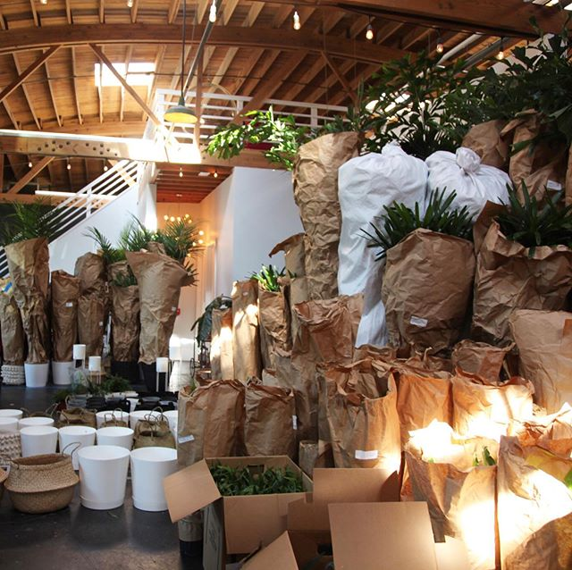 We're doing some prep work for an exciting upcoming project. If plants are good for the soul, then we are feeling mighty fiiiiine. 🌴🌳🌵🌿 #experientialmarketing #plantlife #greenthumb