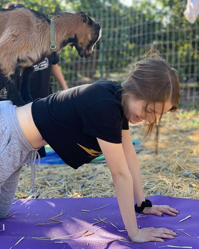 Yes, to the outside observer this might look challenging to do yoga whilst surrounded by baby goats climbing on you ...but trust me it's the best kind of extra. Overwhelming joy, attuned interaction with adorable baby goats, and gorgeous scenery.  Classes this Sunday 3/31 @ 4pm & Saturday 4/27 at 2:00 PM. Sign up @oatsandivyfarm & thank you for the fantastic photos @amylynnn 🤗