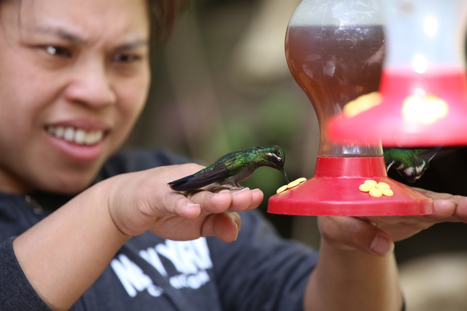 Gayle's hand doubles as a rest area for the hummingbird to rest and eat.