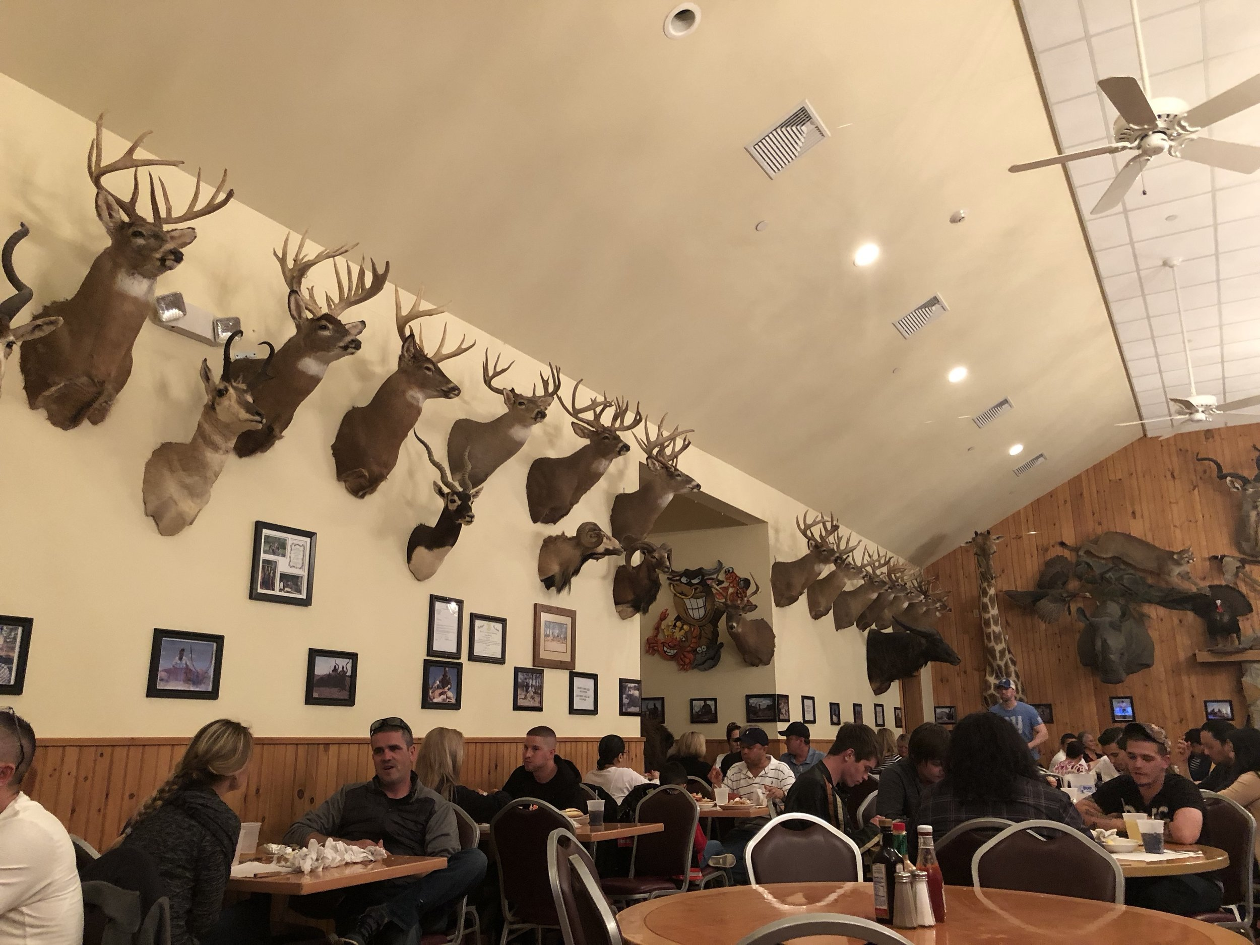 This room showcases land wildlife. The other room was all aquatic wildlife. A lot of these animals were game and the photos on the wall show the owner (i think) with his kills.