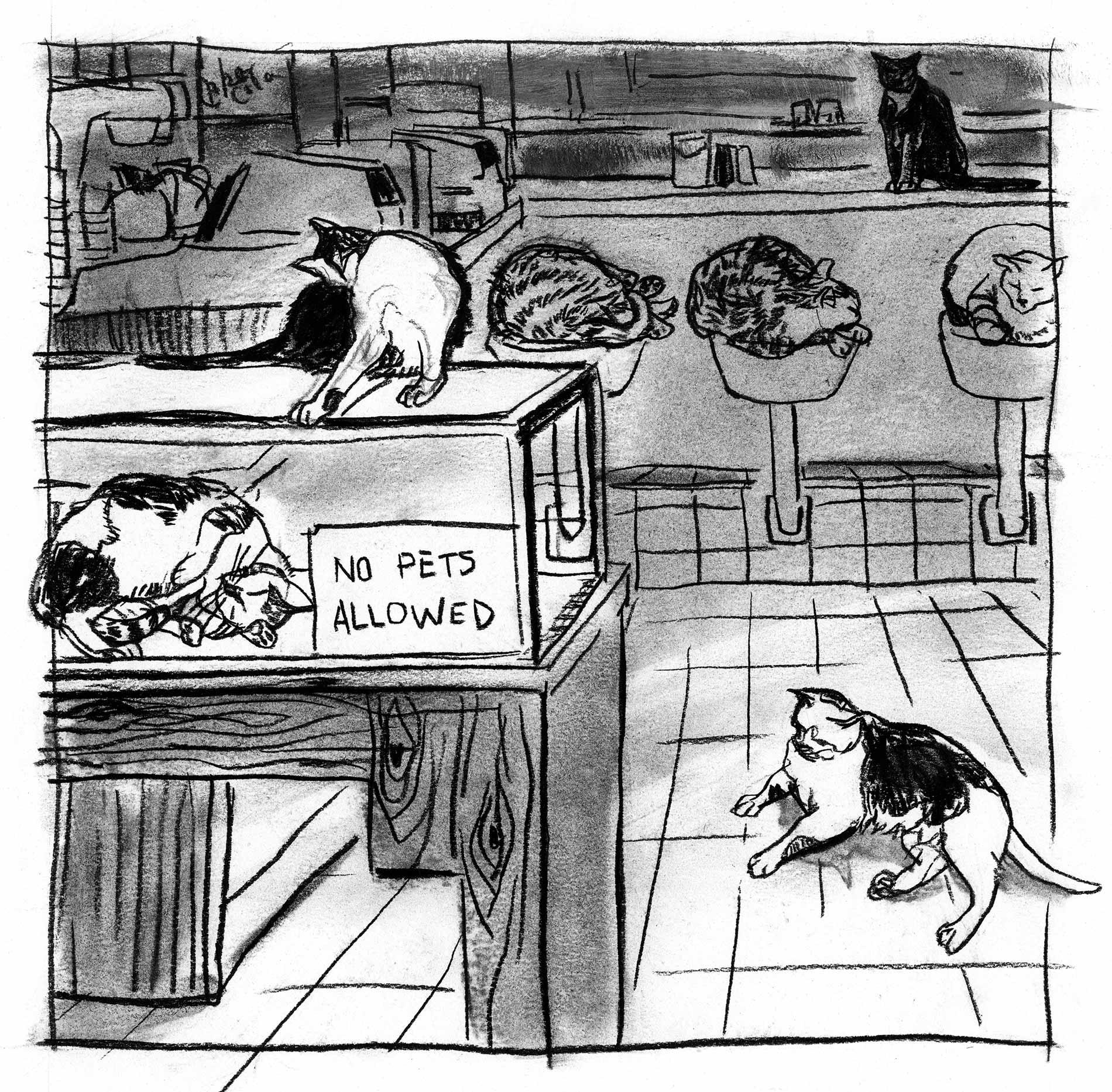 NYT-pets-allowed-cats1.jpg