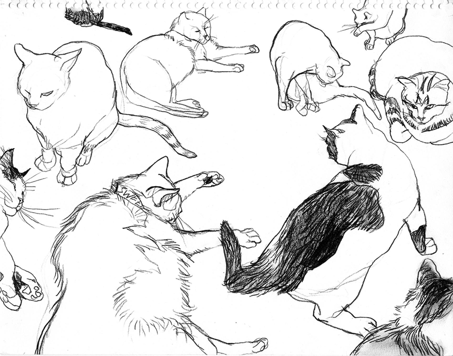 NYT-cats1.jpg