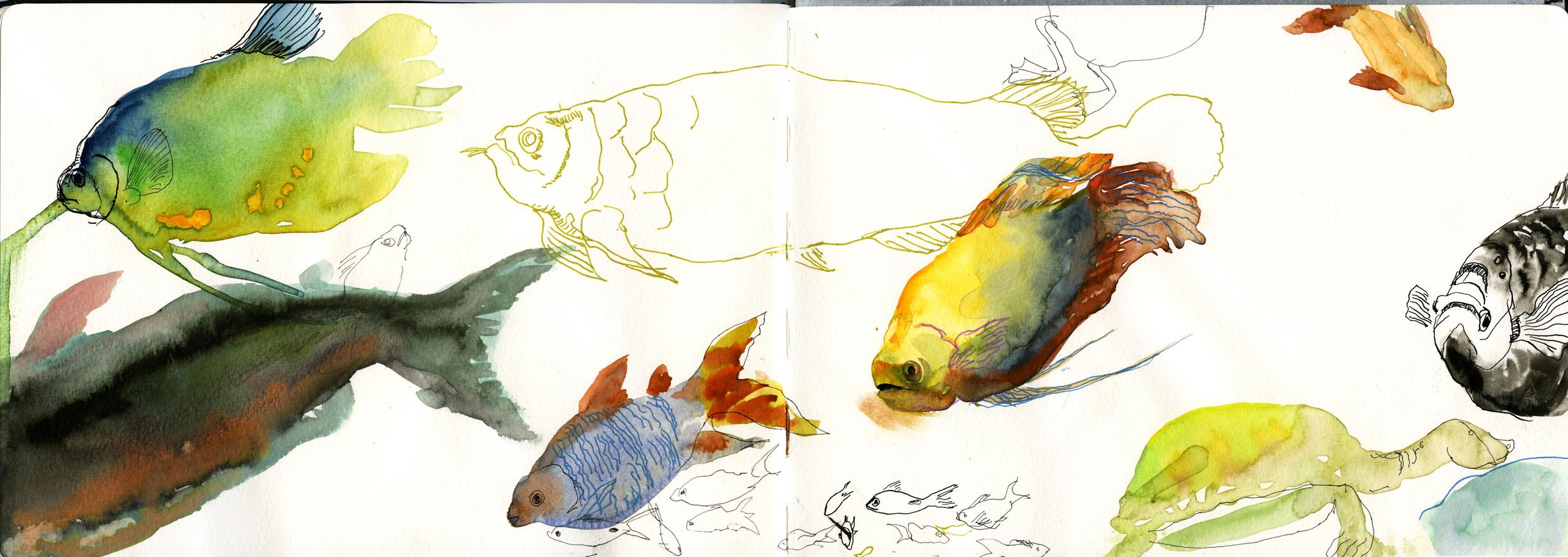 Color Fish.jpg