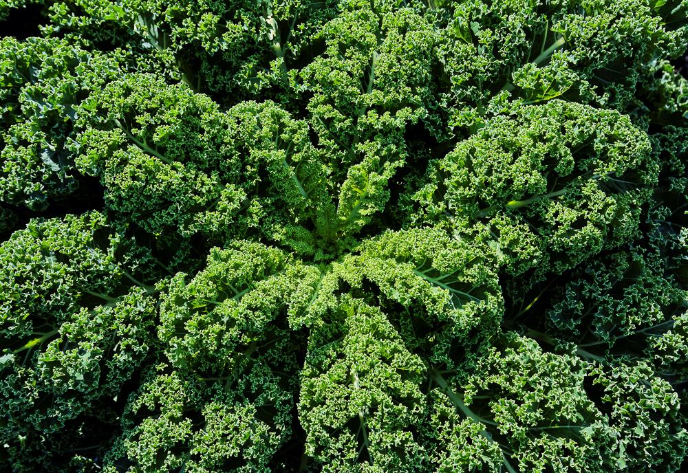 Kale 3x2 1000w.jpg