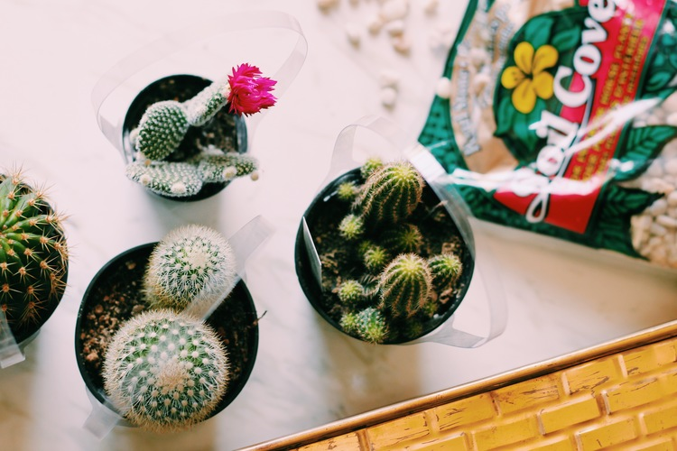 You will need:  -some sort of pot or bowl  -cactus or succulents  -potting soil  -decorative rocks