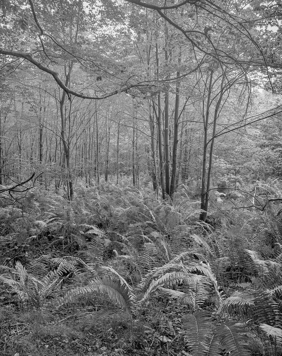 Trees and Ferns