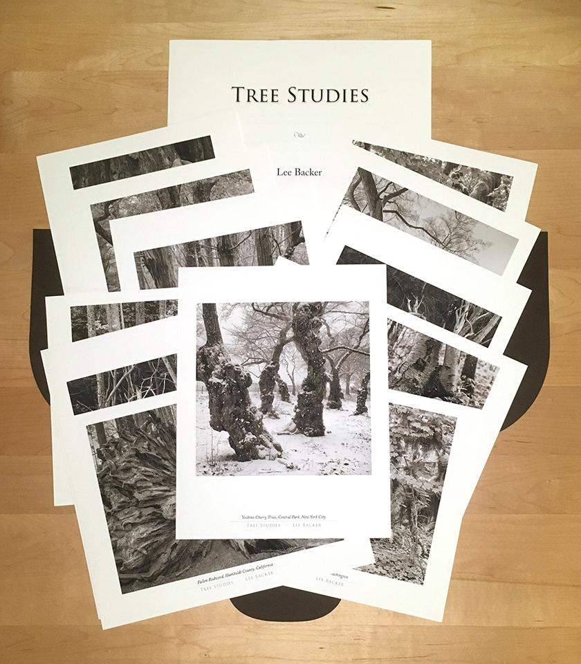 """Tree Studies"" folio"