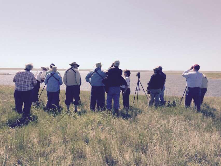 Birders looking at pelicans. Last year, there were 17,000 pelican nests at Chase Lake.