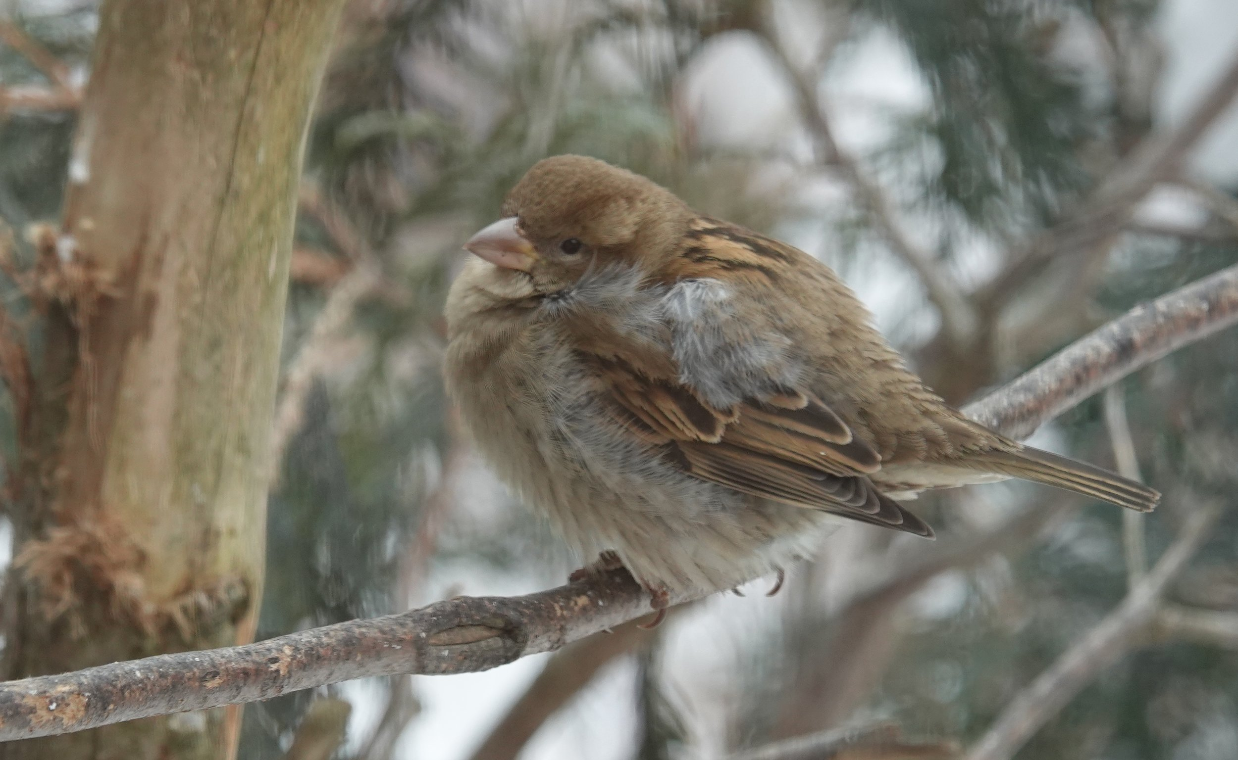 The loveliness of a house sparrow.