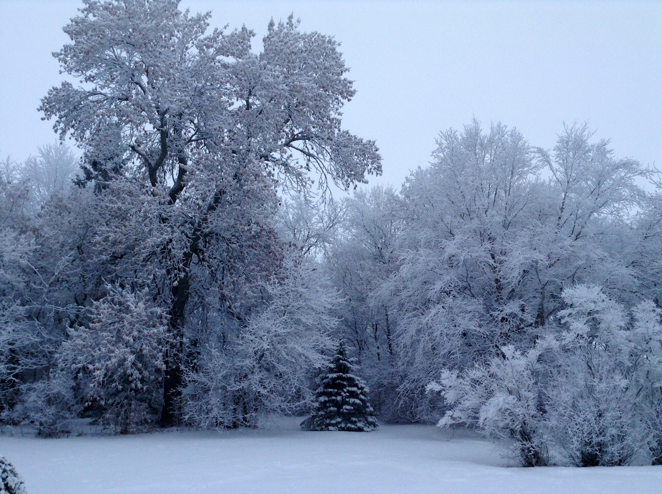 Winter is beautiful. Sometimes it's the most beautiful in a memory.