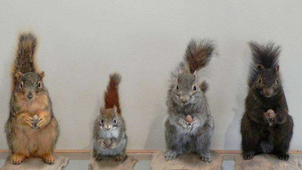 The police lineup from which I pointed out the culprit who had chewed up my new bird feeder.