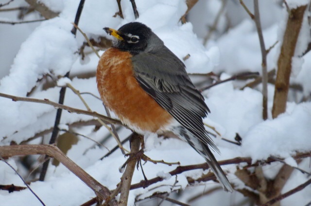 The robin made the weather nicer.